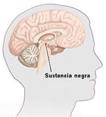 sustancia negra cerebro