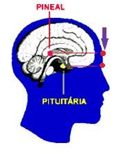 pineal-pituitaria