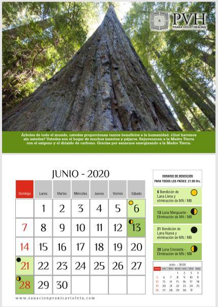 JUNIO 2020 - ÁRBOLES